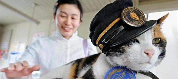 Assicurazioni animali l assicurazione per il gatto